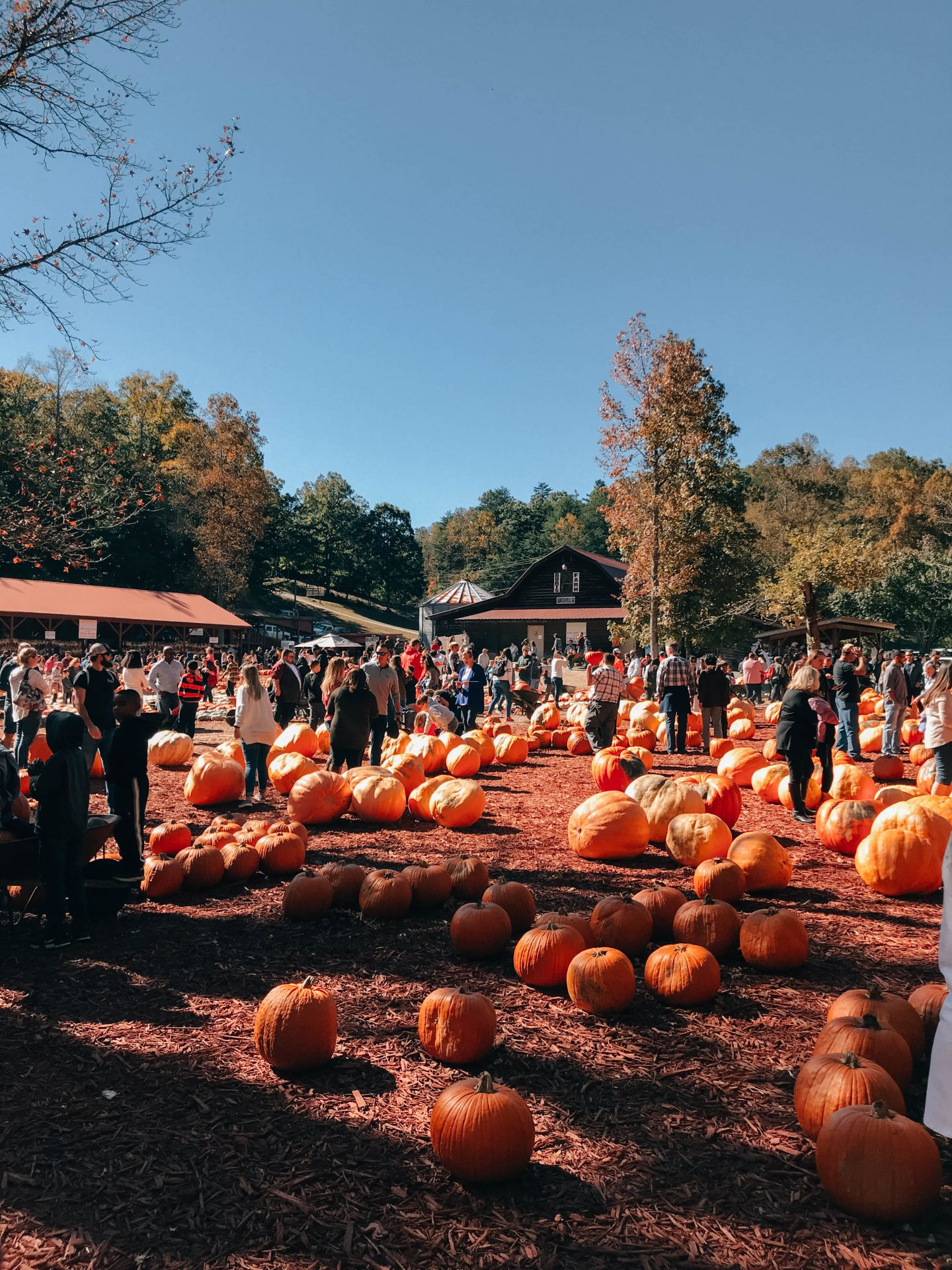 My Favorite Things To Do In Georgia During Fall